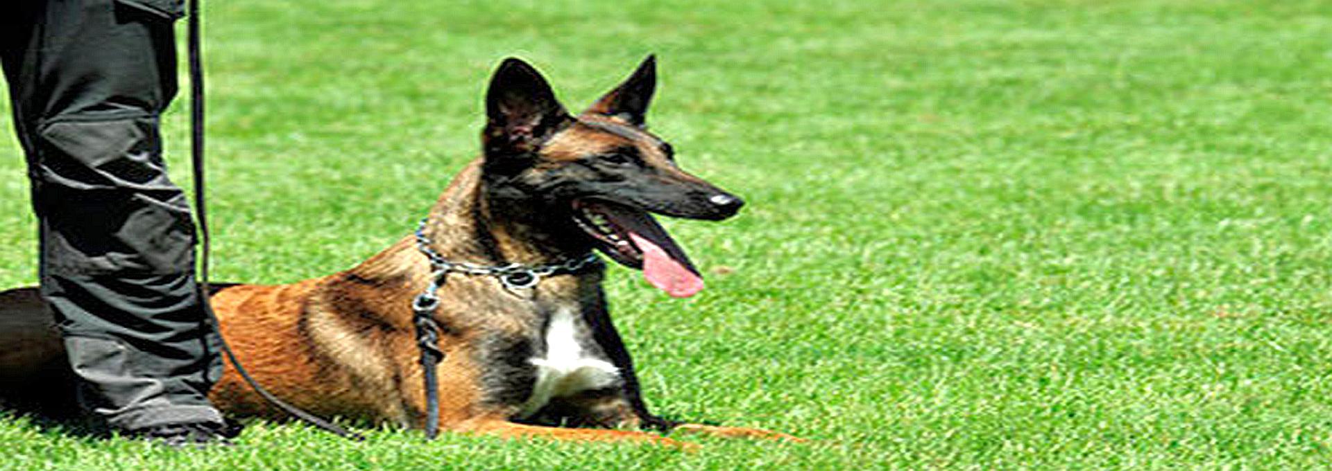 Diensthunde, schützen und deeskalieren ...